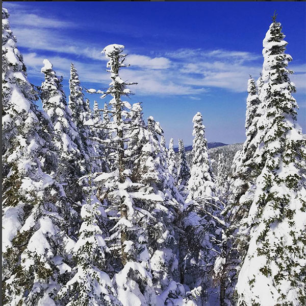Snow-covered trees in Mt. Tremblant during February break