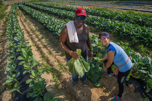 Photo of two volunteers in a collard greens field