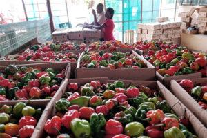 Photo of pepper produced at Mukumu