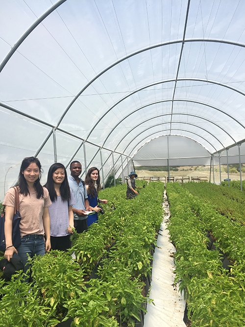 Photo of students in the hydroponic tunnel