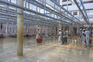 Photo of livestock hanging in a butchering facility