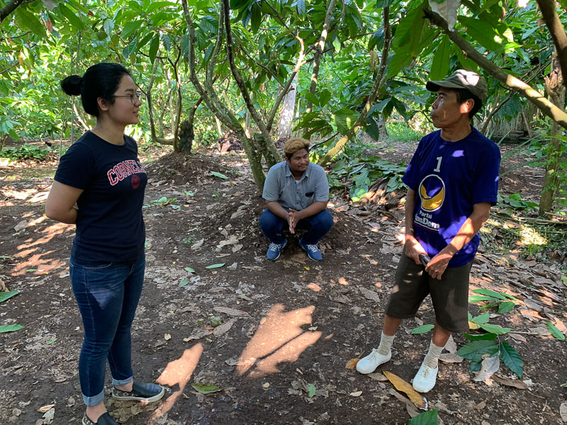Students talking near cacao plants