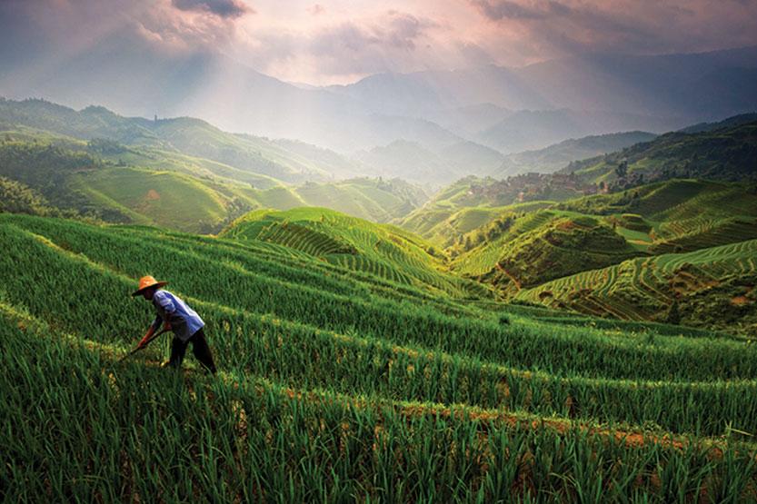 Illustration of farmer in field