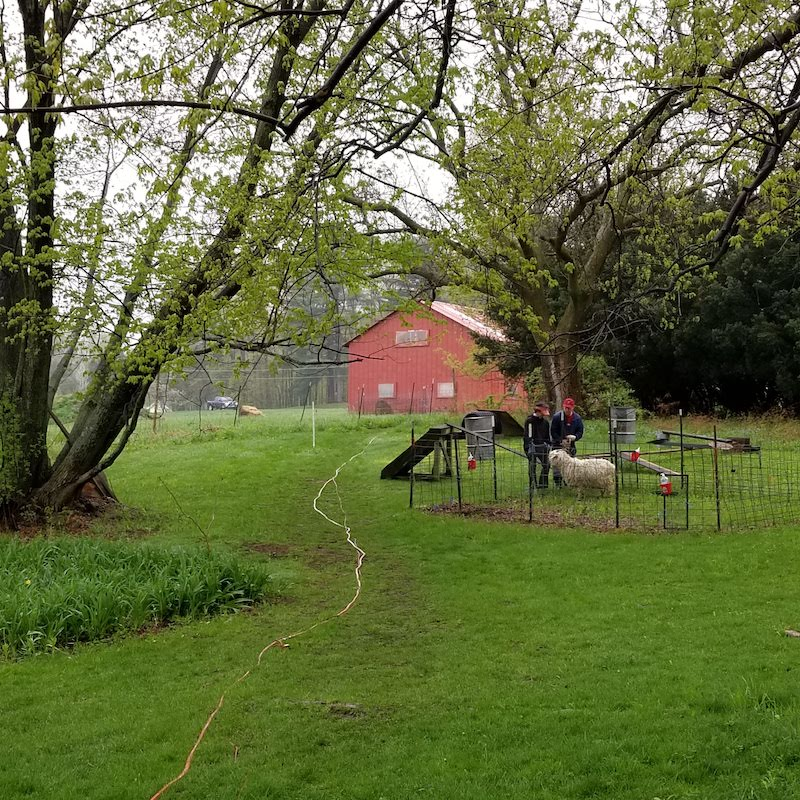 Red farmhouse on a green pasture with trees and a small goat enclosure