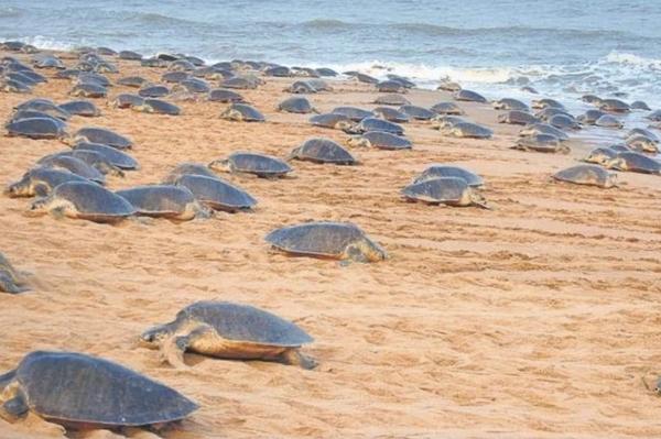 Turtles on the beach