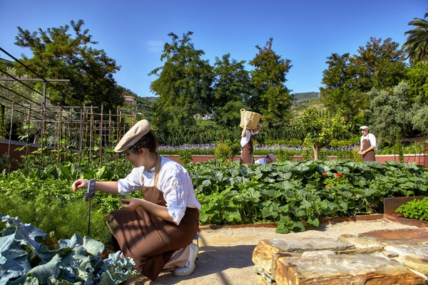 A picture of someone kneeling down and gardening in an organic garden