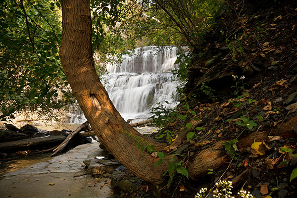 Cascadilla Gorge waterfall with a curved tree trunk in the foreground