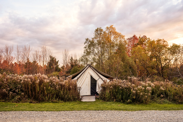 Tent nestled behind shrubbery