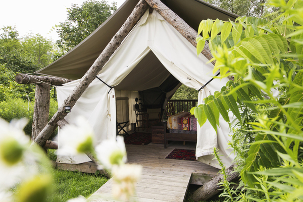A Firelight Camps tent peaks out from behind greenery.